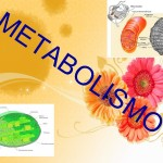 Metabolismo: homens X mulheres